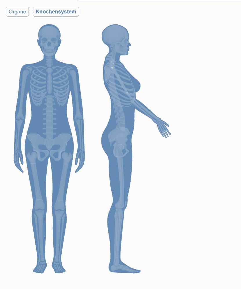 Physio Fachmodul Anatomieatlas